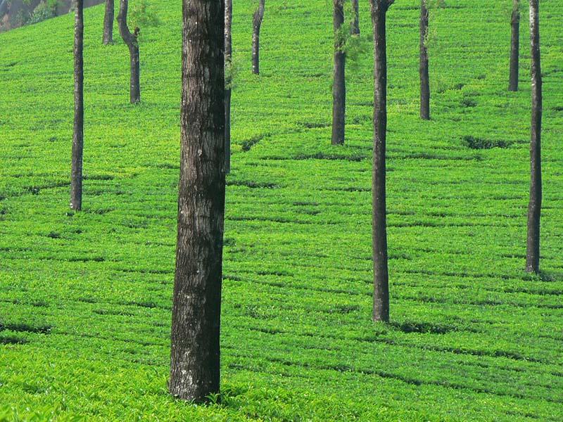 Munnar | India