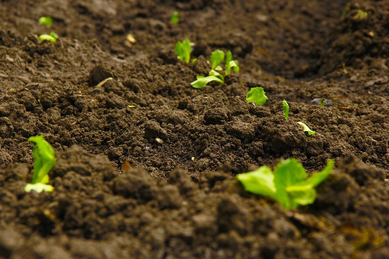 seeds_bhartiya_city