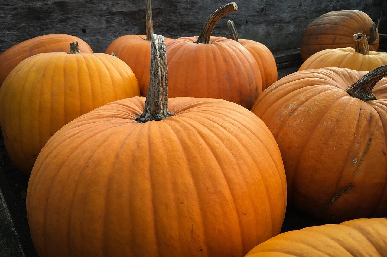 pumpkins_bhartiya_city